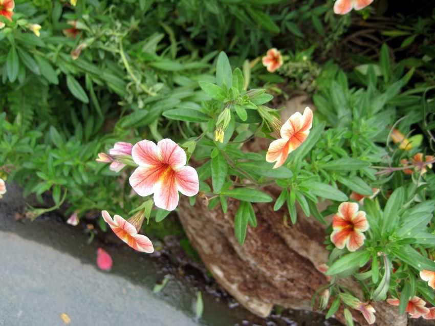 春花の画像 p1_22